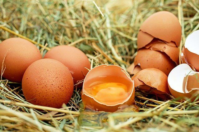 tutto sulle uova le uova si lavano le uova si conservano in frigorifero le uova aumentano il colesterolo